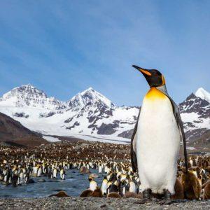 Antarctica - Aurora Expeditions - Surrounds - Aurora-AP-Photo-012