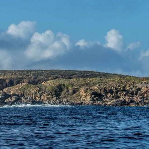 © Rodney Fox Dive Expeditions, Australia Tourism