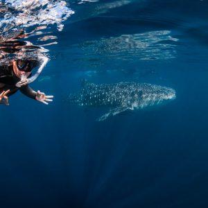 © Exmouth Dive Centre