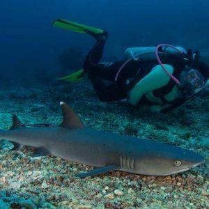 © Borneo Divers