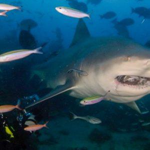© Beqa Adventure Divers