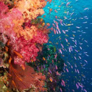 © Ra Divers Fiji - Andrew Simpson