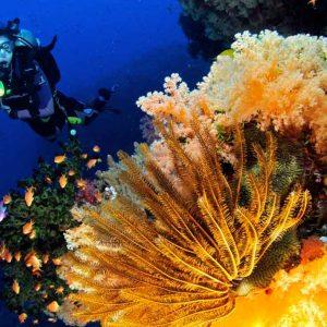 © Volivoli Beach Resort - Ra Divers Fiji