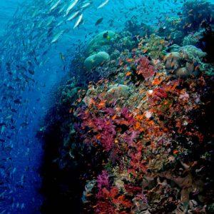 © Ra Divers Fiji
