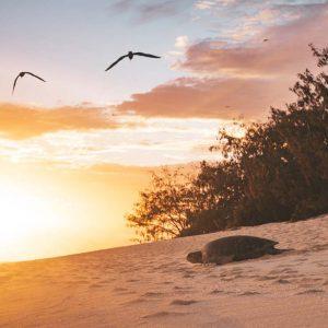 © Heron Island - James Vodicka