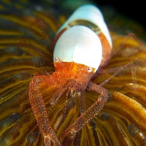© Bastianos Lembeh Dive Resort - Sara Griffiths