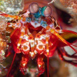 © Papua Explorers Resort