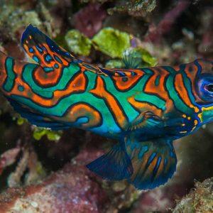 © Papua Paradise Eco Resort - Thomas Haider