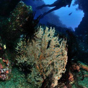 © Tulamben Wreck Divers