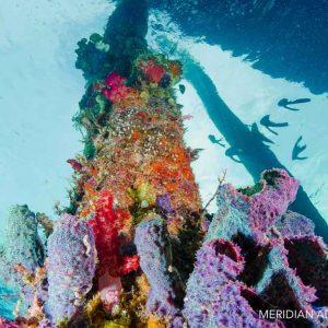 © Meridian Adventure Dive