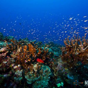 © Kosrae Visitors Bureau-Tim-Rock