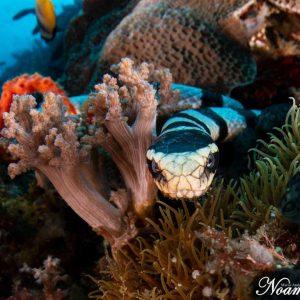 @ Atlantis Resort  Roni Ben Aharon