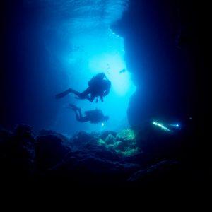 © Thresher Shark Divers - Andrea Agarwal