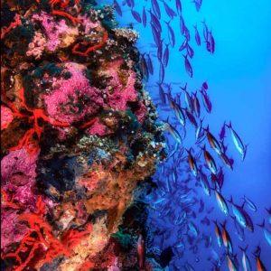 © Asia Divers - Beth Watson