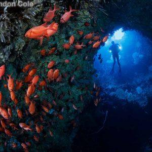 © Raiders Hotel & Dive  - Brandon Cole