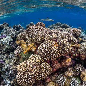 Fakarava Reef Corals - ©Greg-Lecoeur