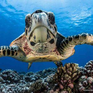 © Greg Lecoeur, Fakarava Top Dive