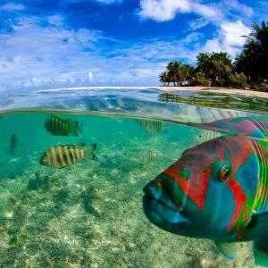Tahiti - Tikehau - Top Dive - © Frederique Legrand
