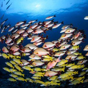 Tahiti - Top Dive - © Frederique Legrand - DSC_9914