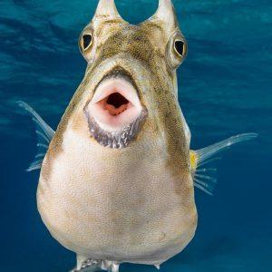 Tahiti - Top Dive -© Greg Lecoeur
