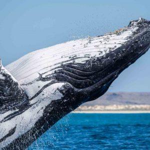 © Aurora Expeditions - Ningaloo Reef - Rosie Leaney